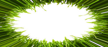 Oval frame made from grass Stock Photography