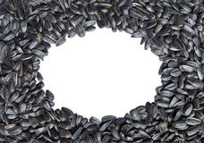 Oval frame made of sunflower seeds. Isolated. Over white background Royalty Free Stock Photos