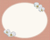 Oval frame and white flower Royalty Free Stock Photography