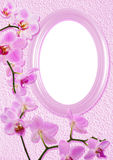Oval Frame With Orchid Royalty Free Stock Photo