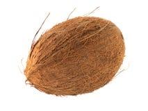Oval kokosnötfrukt Arkivfoton