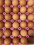 Eggs lined up in egg carton. stock image