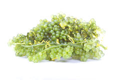 Oval sea grapes seaweed Royalty Free Stock Photos