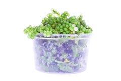 Ovale Seetraubenmeerespflanze lizenzfreie stockfotografie