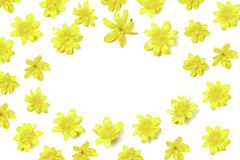 Ovale vorm bloemensamenstelling van heldere gele bloemen op wit royalty-vrije stock afbeeldingen
