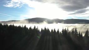 ovanför att flyga för oklarheter Flyg- film för surr 4k av soluppgång, den dimmiga morgonen och skogen stock video