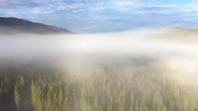 ovanför att flyga för oklarheter Flyg- film för surr 4k av soluppgång, den dimmiga morgonen och skogen lager videofilmer