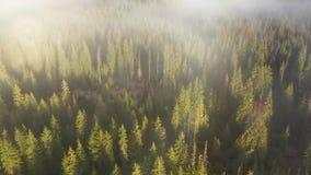 ovanför att flyga för oklarheter Flyg- film för surr 4k av soluppgång, den dimmiga morgonen och skogen arkivfilmer