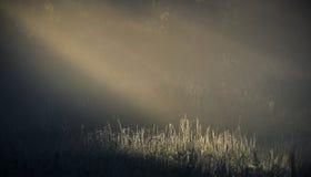 ovanför den härliga naturen för morgonen för guld för fågeloklarhetsfärger tidiga klipska stiger den angenäma tysta reflexionen h Royaltyfria Bilder