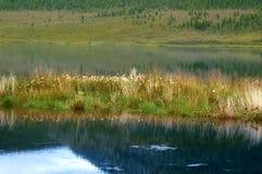 ovanför den härliga naturen för morgonen för guld för fågeloklarhetsfärger tidiga klipska stiger den angenäma tysta reflexionen h Arkivbilder