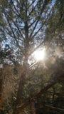 ovanför den härliga naturen för morgonen för guld för fågeloklarhetsfärger tidiga klipska stiger den angenäma tysta reflexionen h Arkivbild