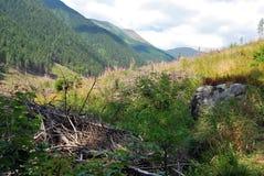 Ovanför den Rackova dolinaen Royaltyfria Bilder