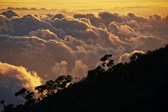 Ovanför den tropiska skogen Fotografering för Bildbyråer