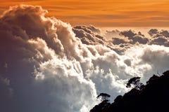 Ovanför den tropiska skogen Arkivfoto