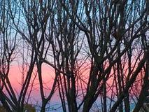 ovanför för sunsolnedgång för ljus päls röda överkanter övervintrar trees Royaltyfri Bild