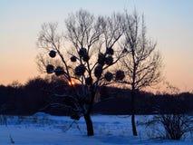 ovanför för sunsolnedgång för ljus päls röda överkanter övervintrar trees royaltyfri foto