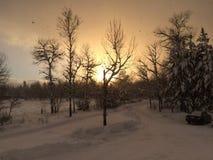 ovanför för sunsolnedgång för ljus päls röda överkanter övervintrar trees royaltyfri fotografi