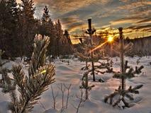 ovanför för sunsolnedgång för ljus päls röda överkanter övervintrar trees Arkivbild