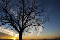 ovanför för sunsolnedgång för ljus päls röda överkanter övervintrar trees Royaltyfria Foton