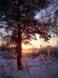 ovanför för sunsolnedgång för ljus päls röda överkanter övervintrar trees Arkivfoto