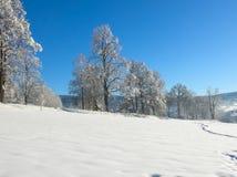 ovanför för sunsolnedgång för ljus päls röda överkanter övervintrar trees berg snow under Djupfrysta snöig träd och panorama för  Royaltyfria Foton