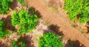 Ovanför gröna träd stock video