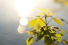 ovanför grönt leavesvatten Royaltyfri Fotografi