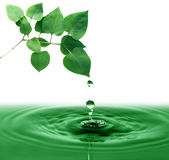 ovanför grönt leavesvatten Royaltyfria Foton