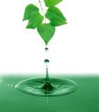 ovanför grönt leavesvatten Arkivfoton