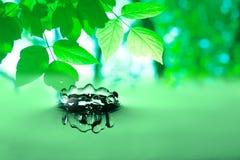 ovanför grönt leavesvatten Royaltyfria Bilder