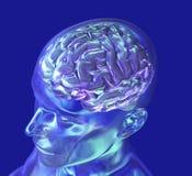 ovanför hjärnexponeringsglashuvudet Royaltyfri Fotografi