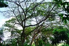 Ovanför jordningen i en colombiansk skog Arkivfoto