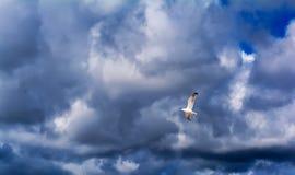 ovanför mörkt flyghav för fågel öppna seagullvingar royaltyfri bild