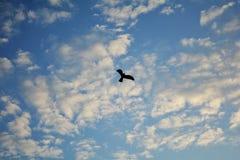 ovanför mörkt flyghav för fågel öppna seagullvingar Arkivfoton