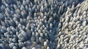 Ovanför sikt av djupfrysta träd i vinterskog stock video