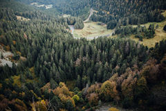 ovanför skog Arkivbild