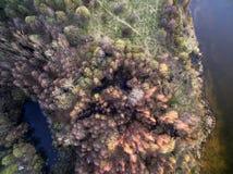 ovanför skog Royaltyfri Fotografi