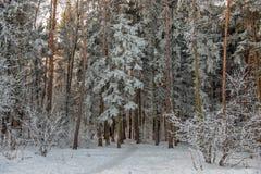 ovanför skogliggande skjuten snowtreesvinter royaltyfri bild