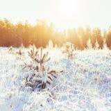 ovanför skogliggande skjuten snowtreesvinter Arkivbilder