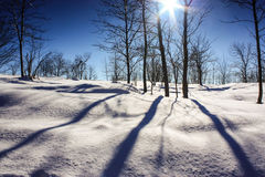 ovanför skogliggande skjuten snowtreesvinter Royaltyfria Bilder