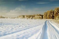 ovanför skogliggande skjuten snowtreesvinter Arkivbild