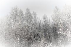ovanför skogliggande skjuten snowtreesvinter royaltyfria foton