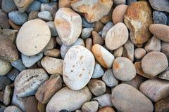 ovanför tillägg fotograferade pebblen havsseaweedvatten Royaltyfria Bilder