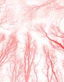 Ovanlig abstrakt modell för idérik skugga för solnedgång orange stock illustrationer