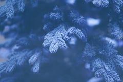 Ovanlig bakgrund av julgranfilialer Nytt år för begrepp Arkivbild