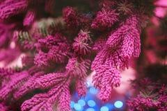 Ovanlig bakgrund av julgranfilialer Nytt år för begrepp Royaltyfri Fotografi
