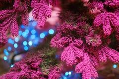 Ovanlig bakgrund av julgranfilialer Nytt år för begrepp Royaltyfri Foto