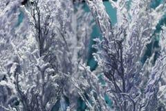 Ovanlig bakgrund av trädfilialer Nytt år för begrepp Royaltyfri Foto