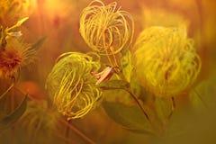 Ovanlig blomma royaltyfri fotografi