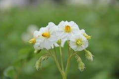 ovanlig blomma Arkivbild